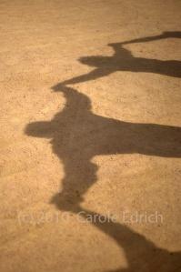 shadow solidarity