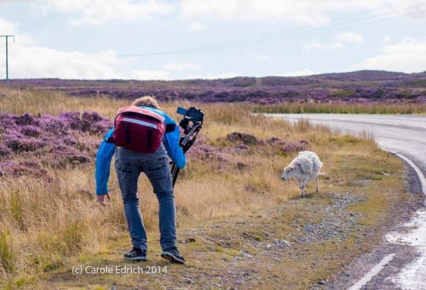 Film camera man and sheep on The Tumble, (c) Carole Edrich 2014