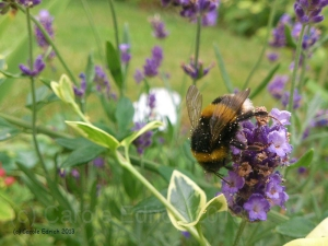 The subject of this photo is clearly the bee, but by showing it on a clump of lavender with other plants and grass around it I'm giving more balance to the photograph and more context to the visual story.